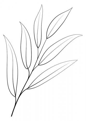 disegni foglie