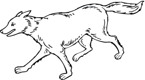 disegni lupo per bambini