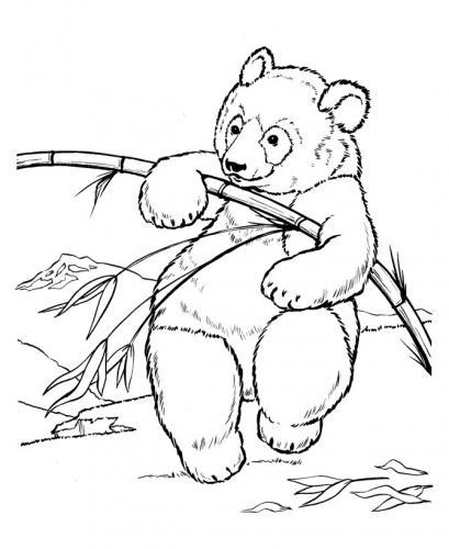 disegni orsetti da colorare