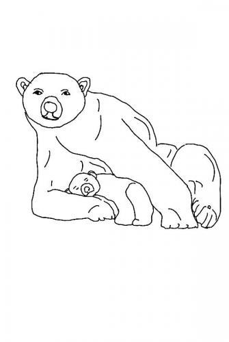 disegni orsi