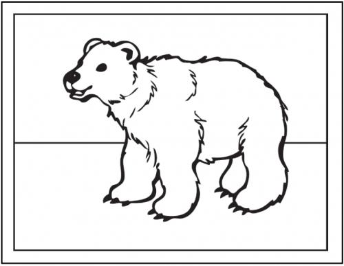 disegni orso polare
