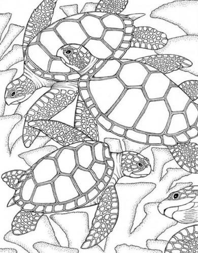 disegni di un paesaggio marino