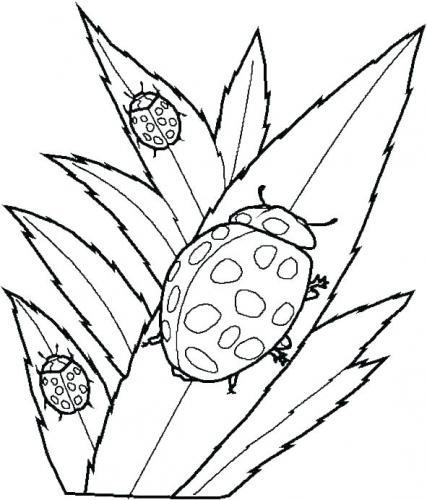 disegni per bambini coccinella