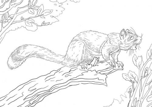 disegni per bambini scoiattoli