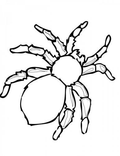 ragno di Halloween