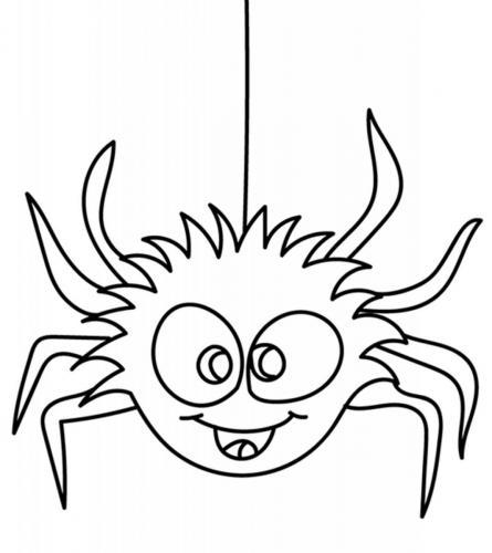 ragno simpatico