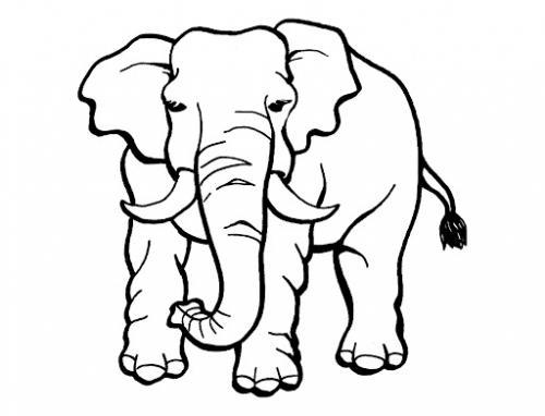 disegni per un elefante