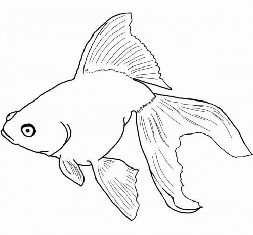 pesce con una lunga coda