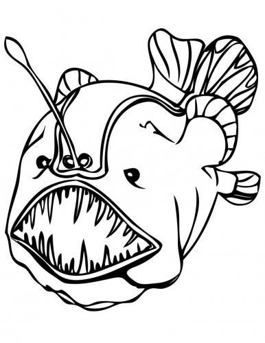 pesce scorfano in primo piano