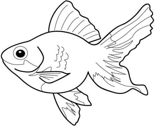 pesciolino che nuota