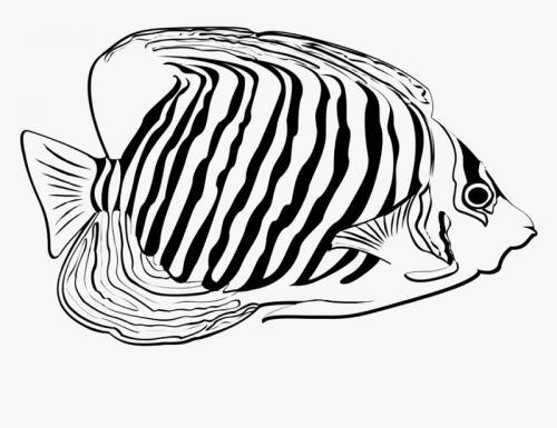 pesce tropicale bello