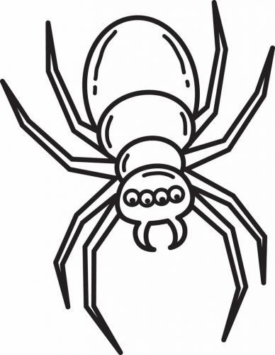 ragno con cinque occhi