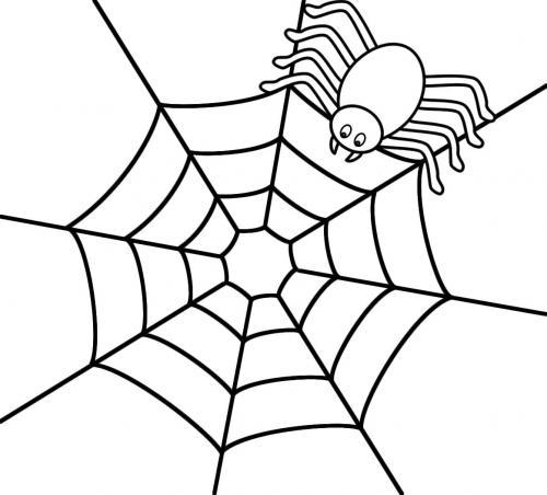 ragnatela con ragno