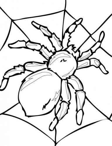 disegno del ragno