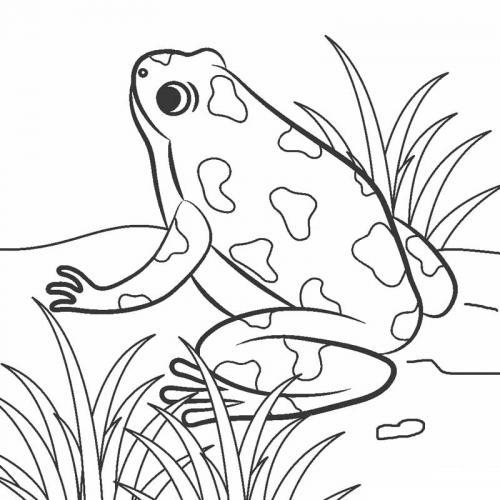 disegni rana