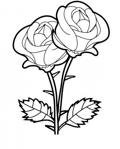 mazzo con due rose