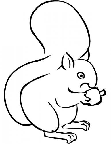 disegni scoiattolo