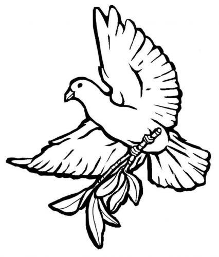 colomba sopra un ramo