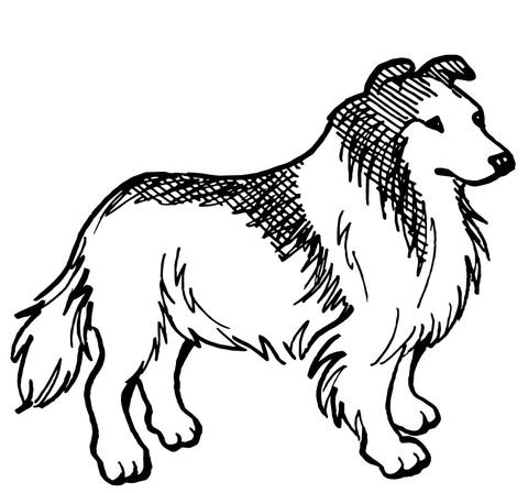 disegno cagnolino