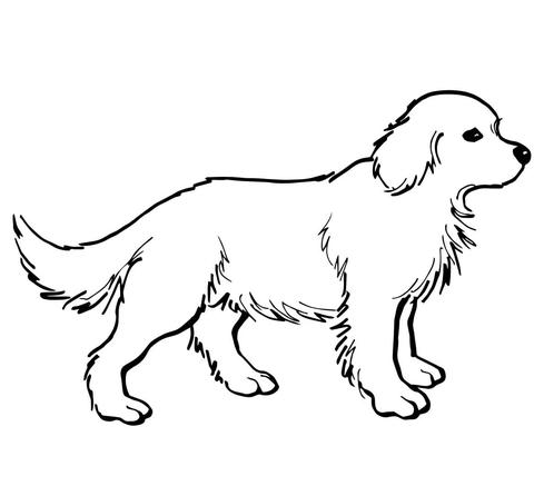 disegno cani