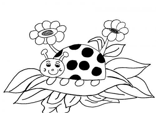 disegno coccinella colorata