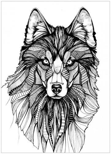 disegno da colorare lupo