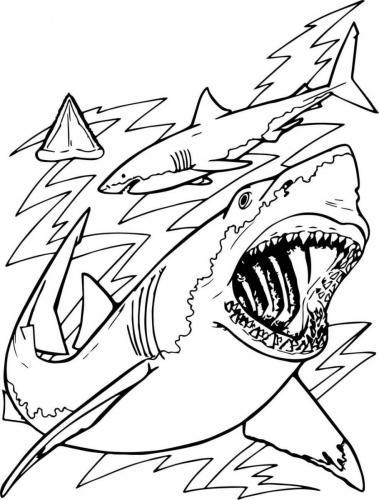 squalo che va a caccia nel mare