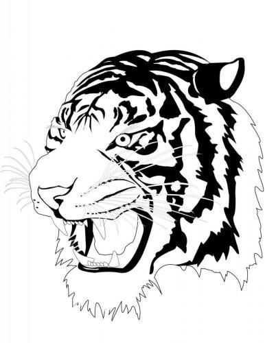 disegno da colorare tigre