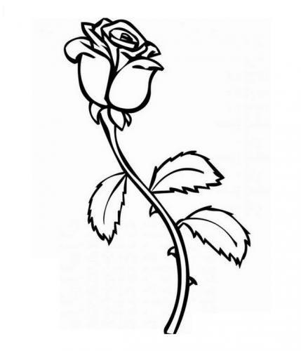 disegno di fiori