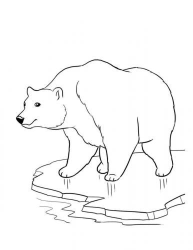 disegno di orso