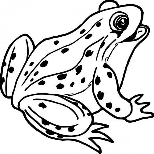 disegno di una rana