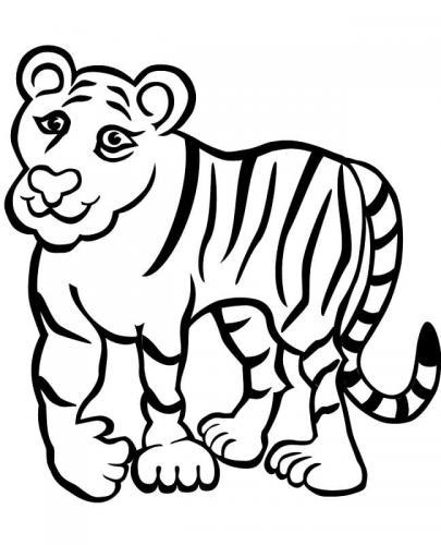 disegno di una tigre