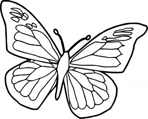 disegno farfalla