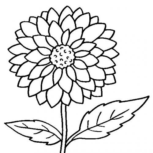 disegno fiore da colorare