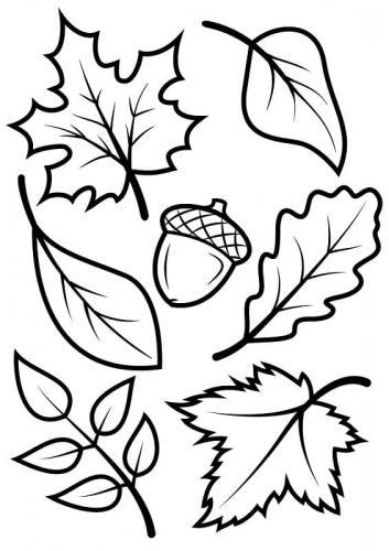 disegno foglie Autunno