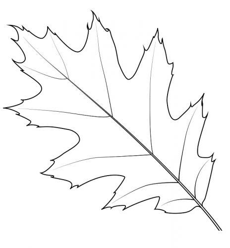 disegno foglie