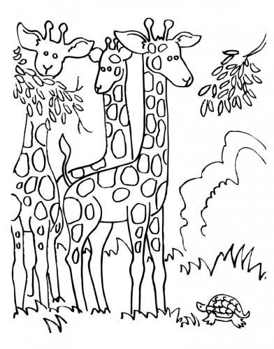 disegno giraffa pdf gratis