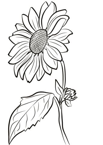 disegno girasoli