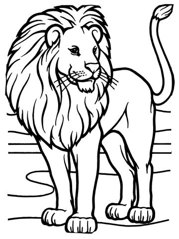 disegno leone