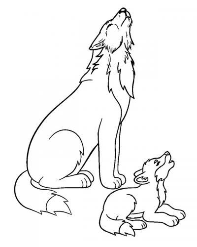 disegno lupo che ulula