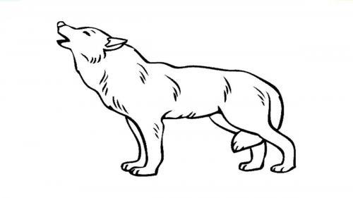 disegno lupo da colorare