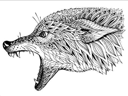 disegno lupo