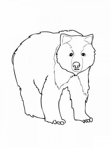 disegno orso da colorare