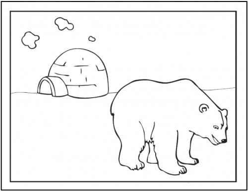 disegno orso polare