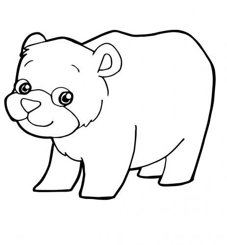 disegno orso