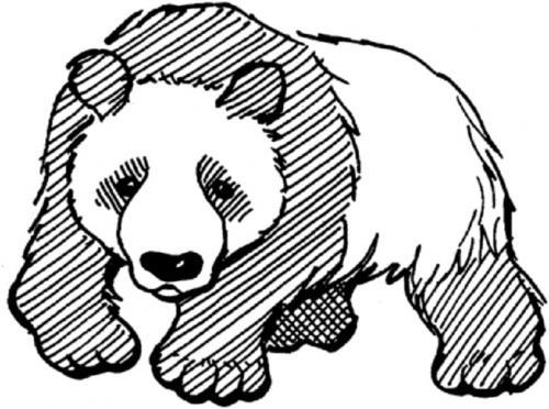 disegno panda