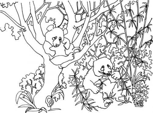 disegno panda per bambini