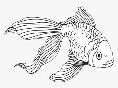pesce che nuota verso il basso