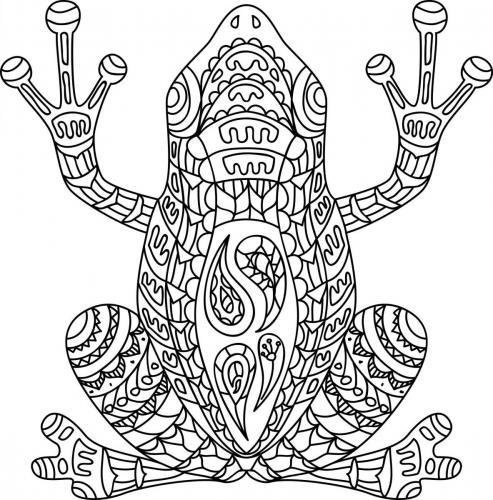 disegno ranocchio