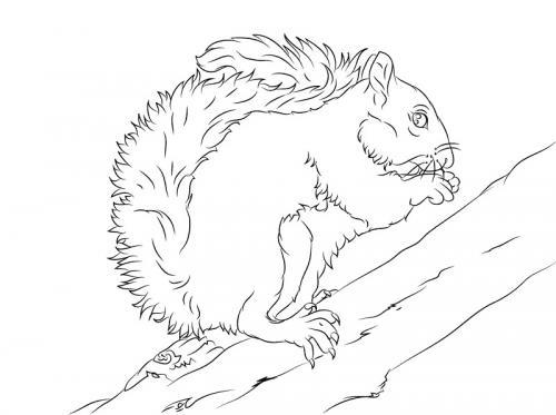 disegno scoiattolo